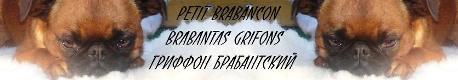 Petit Brabancon
